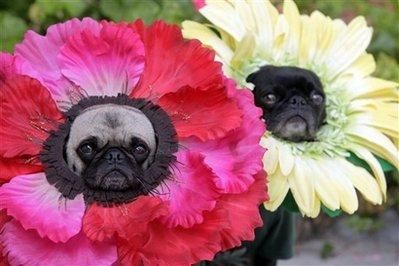 Halloween Flower Power